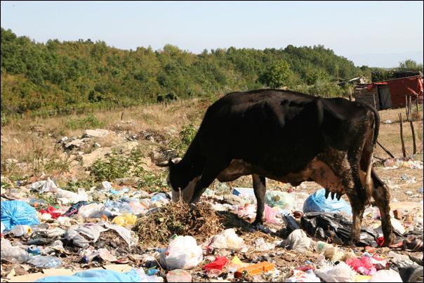 Le recyclage des déchets n'est pas encore une priorité
