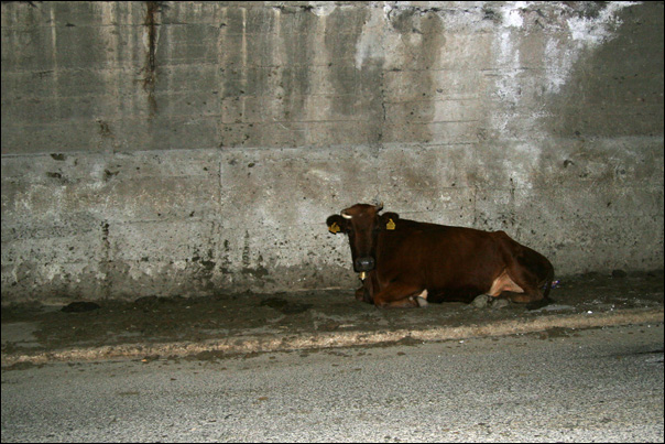 photo vache tunnel kosovo